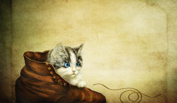Why do cats like shoes? Our furry friends have some interesting reasons